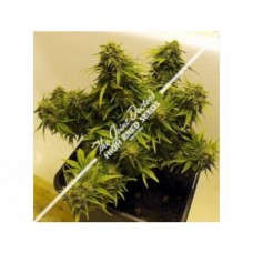 Lowryder Mix Autoflowering Regular